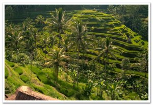 indonesia sekilas2
